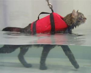 pic-Library-underwater-treadmill-cat